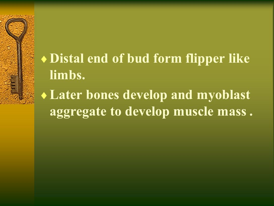  Upper limb rotates laterally 90 degrees  Specific dermatone ( which is skin area supplied by a single spinal nerve )