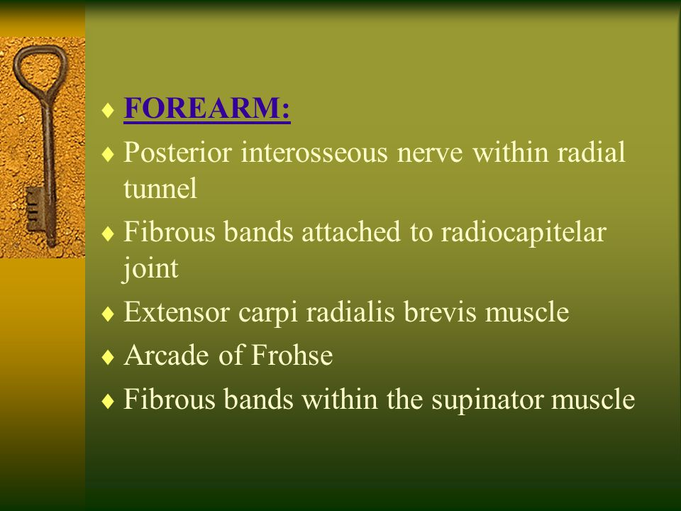  FOREARM:  Posterior interosseous nerve within radial tunnel  Fibrous bands attached to radiocapitelar joint  Extensor carpi radialis brevis muscl