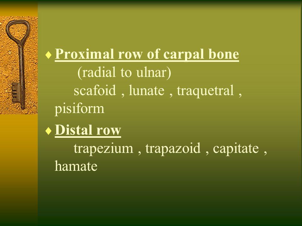  Proximal row of carpal bone (radial to ulnar) scafoid, lunate, traquetral, pisiform  Distal row trapezium, trapazoid, capitate, hamate