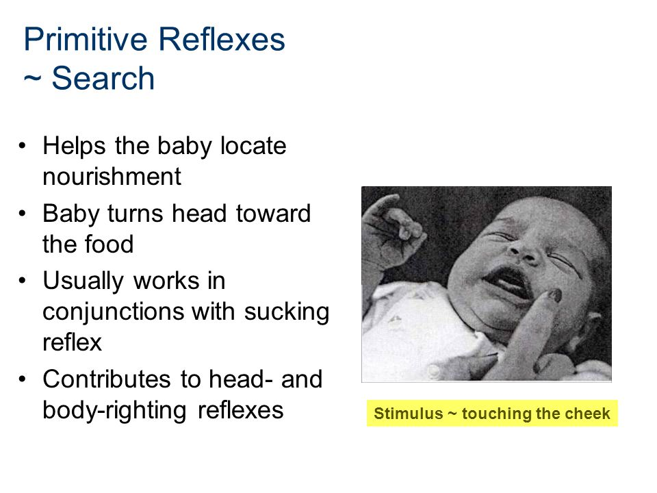 Primitive Reflexes ~ Search Helps the baby locate nourishment Baby turns head toward the food Usually works in conjunctions with sucking reflex Contri