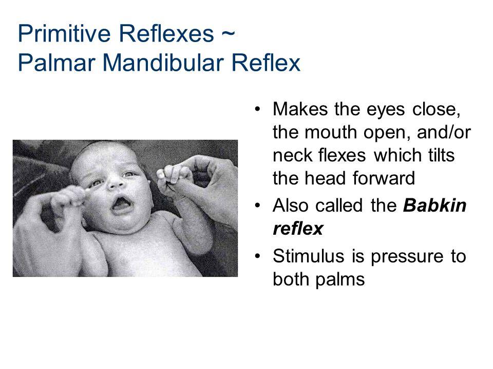 Primitive Reflexes ~ Palmar Mandibular Reflex Makes the eyes close, the mouth open, and/or neck flexes which tilts the head forward Also called the Ba