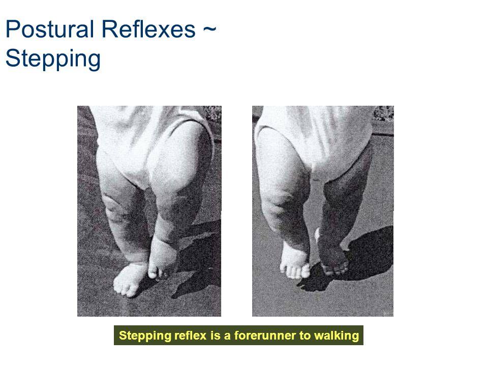 Postural Reflexes ~ Stepping Stepping reflex is a forerunner to walking