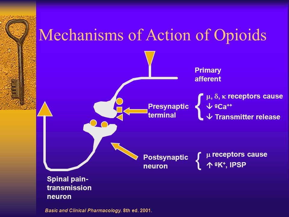 Mechanisms of Action of Opioids Basic and Clinical Pharmacology.