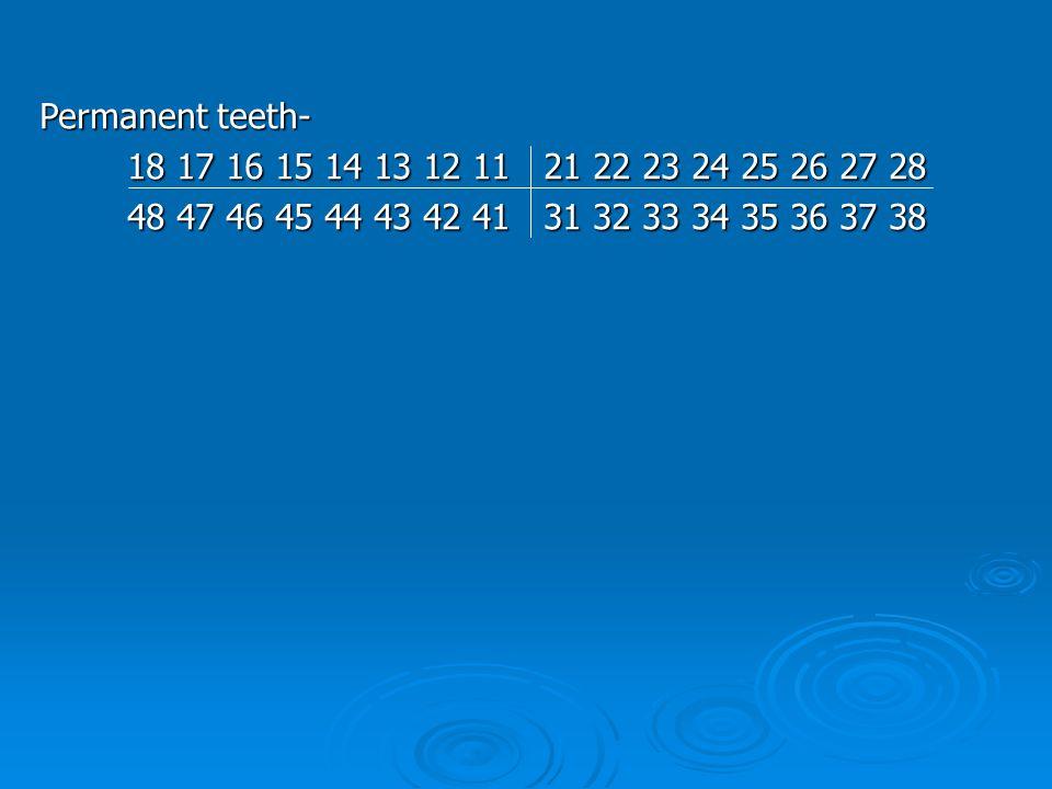 Permanent teeth- 18 17 16 15 14 13 12 11 21 22 23 24 25 26 27 28 18 17 16 15 14 13 12 11 21 22 23 24 25 26 27 28 48 47 46 45 44 43 42 41 31 32 33 34 35 36 37 38 48 47 46 45 44 43 42 41 31 32 33 34 35 36 37 38