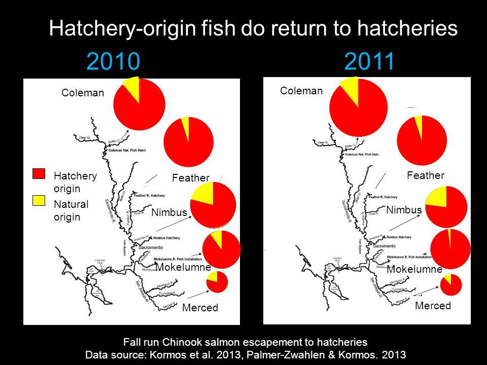 Hatchery-origin fish do return to hatcheries 20102011 Fall run Chinook salmon escapement to hatcheries Data source: Kormos et al. 2013, Palmer-Zwahlen