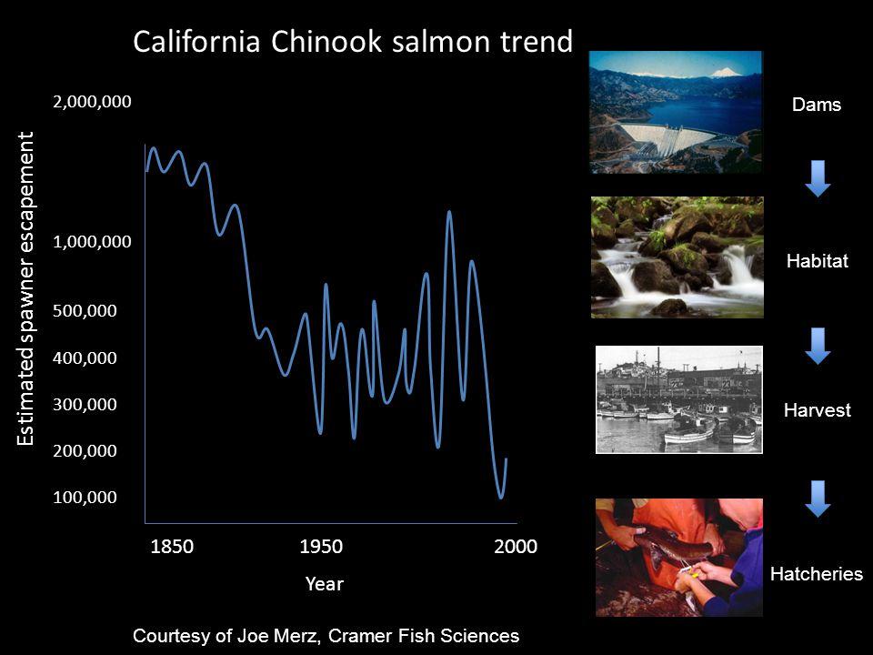 California Chinook salmon trend 1850 1950 2000 Year Estimated spawner escapement 2,000,000 1,000,000 500,000 400,000 300,000 200,000 100,000 Dams Habitat Harvest Hatcheries Courtesy of Joe Merz, Cramer Fish Sciences