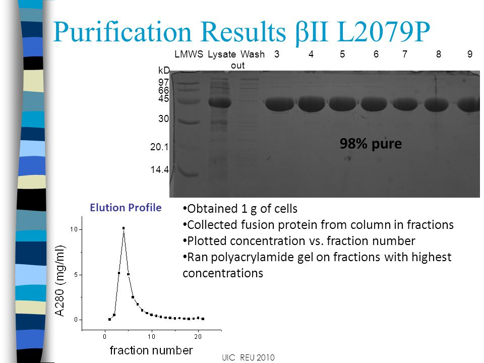 Purification Results βII L2079P LMWS Lysate Wash 3 4 5 6 7 8 9 out Elution Profile Obtained 1 g of cells Collected fusion protein from column in fractions Plotted concentration vs.