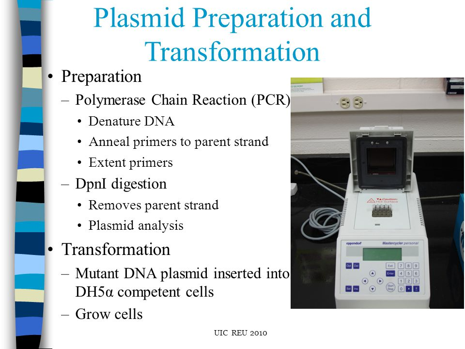 Plasmid Preparation and Transformation Preparation –Polymerase Chain Reaction (PCR) Denature DNA Anneal primers to parent strand Extent primers –DpnI digestion Removes parent strand Plasmid analysis Transformation –Mutant DNA plasmid inserted into DH5α competent cells –Grow cells UIC REU 2010