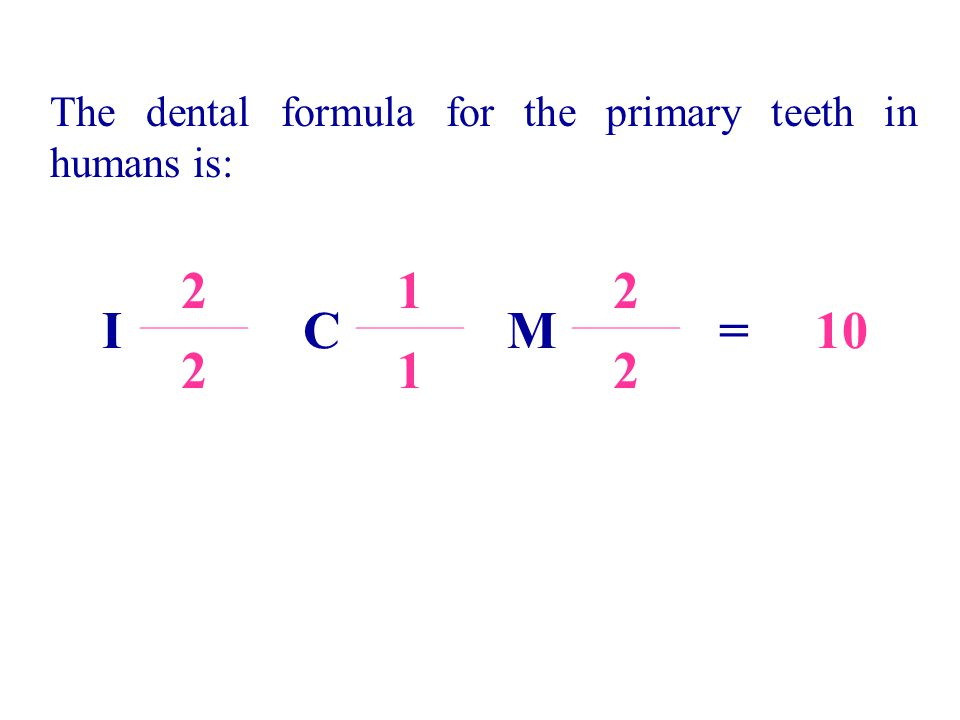 I 2 C 1 M 2 =10 212 The dental formula for the primary teeth in humans is: