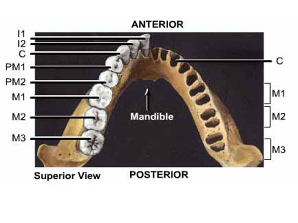 Palmer Notation System: Maxillary Left TeethMaxillary Right Teeth Madibular Left TeethMandibular Right Teeth