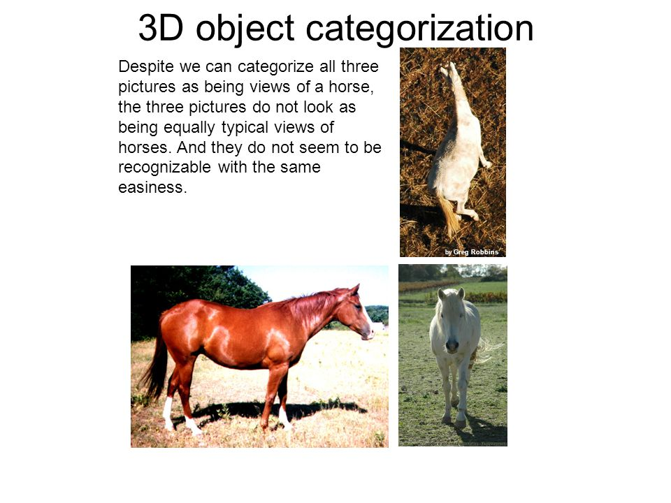3D object categorization by Greg Robbins Despite we can categorize all three pictures as being views of a horse, the three pictures do not look as being equally typical views of horses.