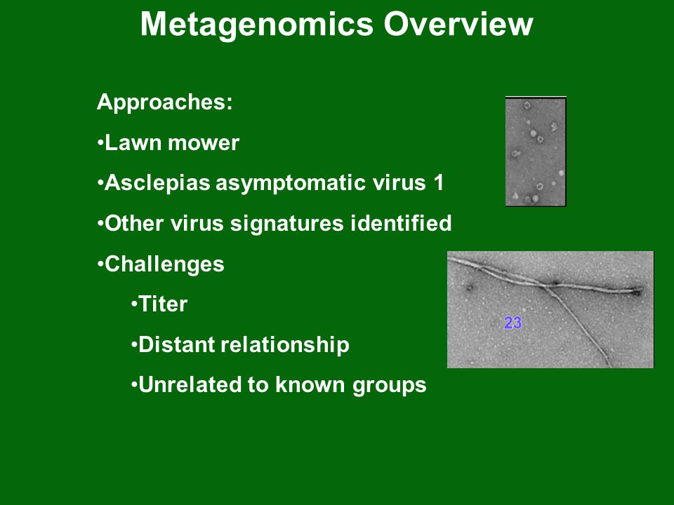 Metagenomics Overview Approaches: Lawn mower Asclepias asymptomatic virus 1 Other virus signatures identified Challenges Titer Distant relationship Unrelated to known groups