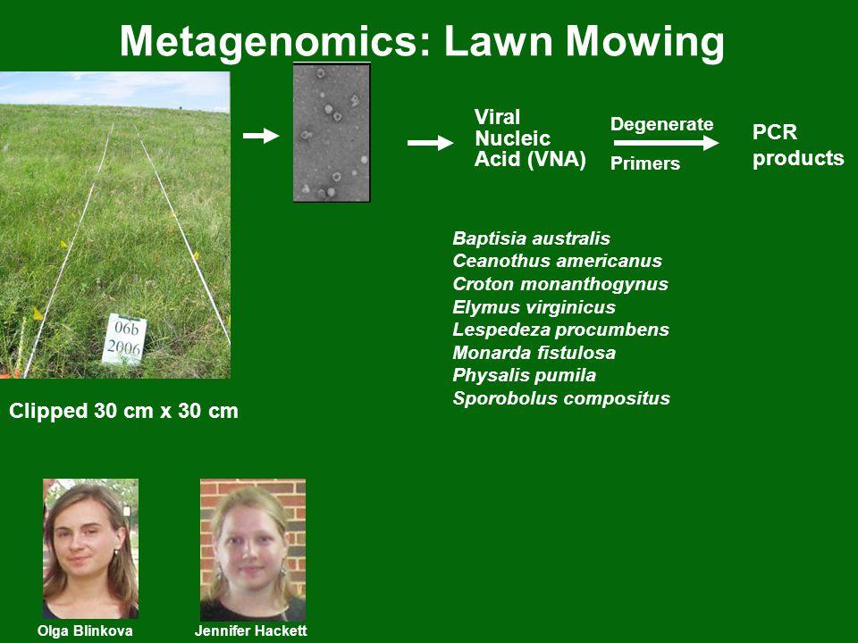 Metagenomics: Lawn Mowing Baptisia australis Ceanothus americanus Croton monanthogynus Elymus virginicus Lespedeza procumbens Monarda fistulosa Physal