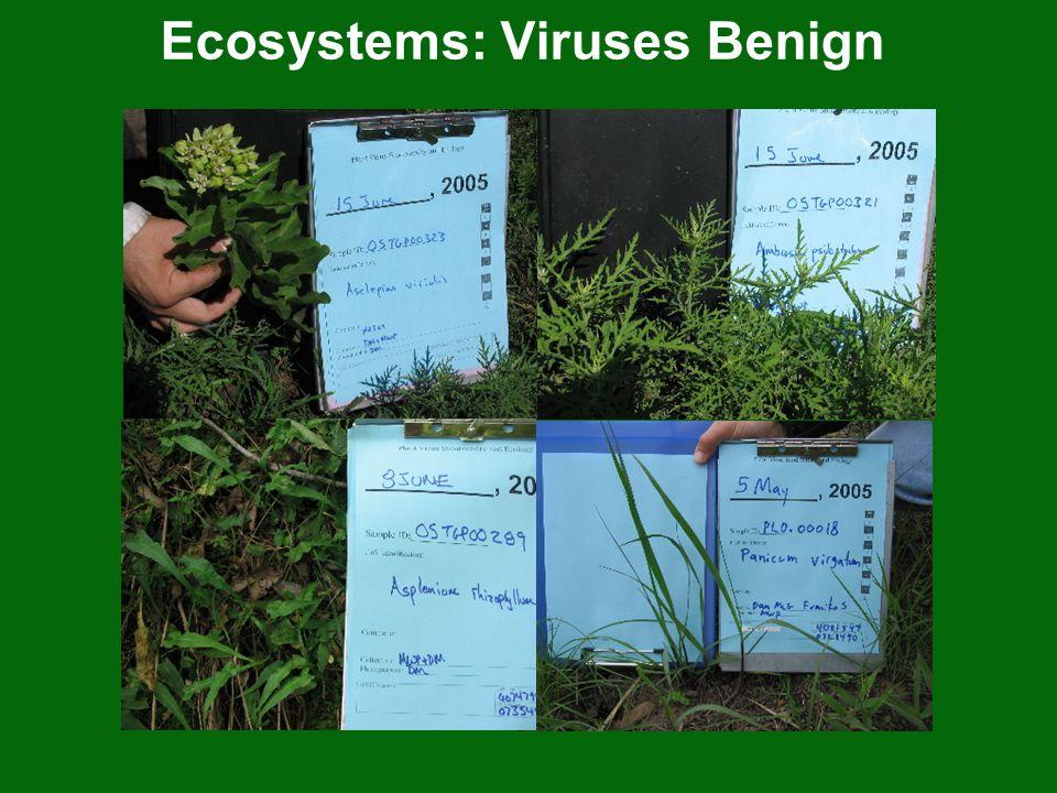 Ecosystems: Viruses Benign