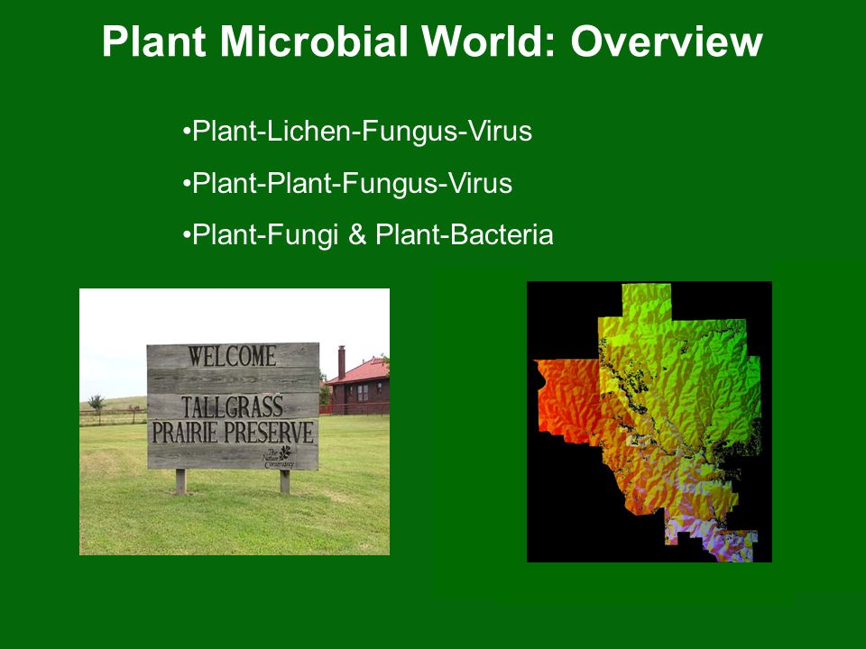 Plant Microbial World: Overview Plant-Lichen-Fungus-Virus Plant-Plant-Fungus-Virus Plant-Fungi & Plant-Bacteria