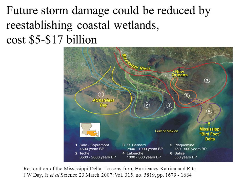 Future storm damage could be reduced by reestablishing coastal wetlands, cost $5-$17 billion Restoration of the Mississippi Delta: Lessons from Hurric