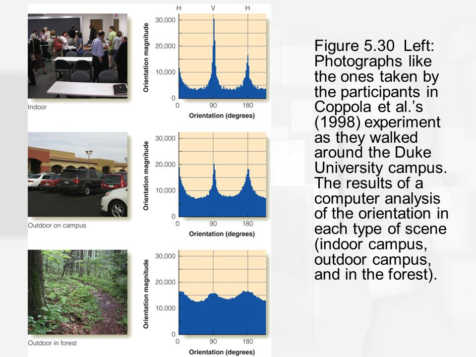 Figure 5.30 Left: Photographs like the ones taken by the participants in Coppola et al.'s (1998) experiment as they walked around the Duke University