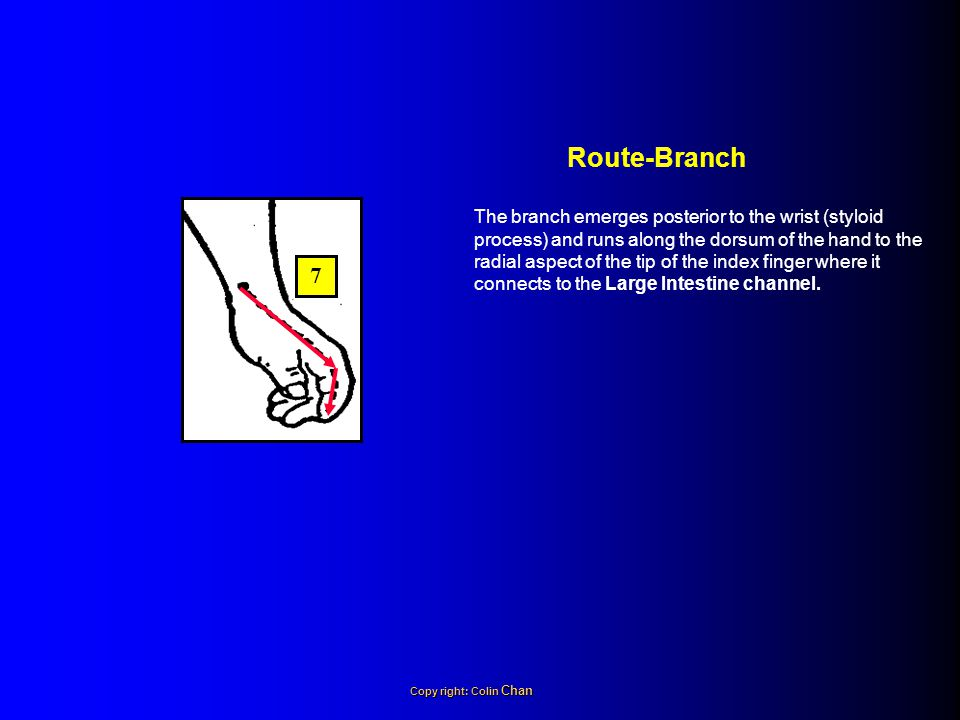 The branch emerges posterior to the wrist (styloid process) and runs along the dorsum of the hand to the radial aspect of the tip of the index finger where it connects to the Large Intestine channel.
