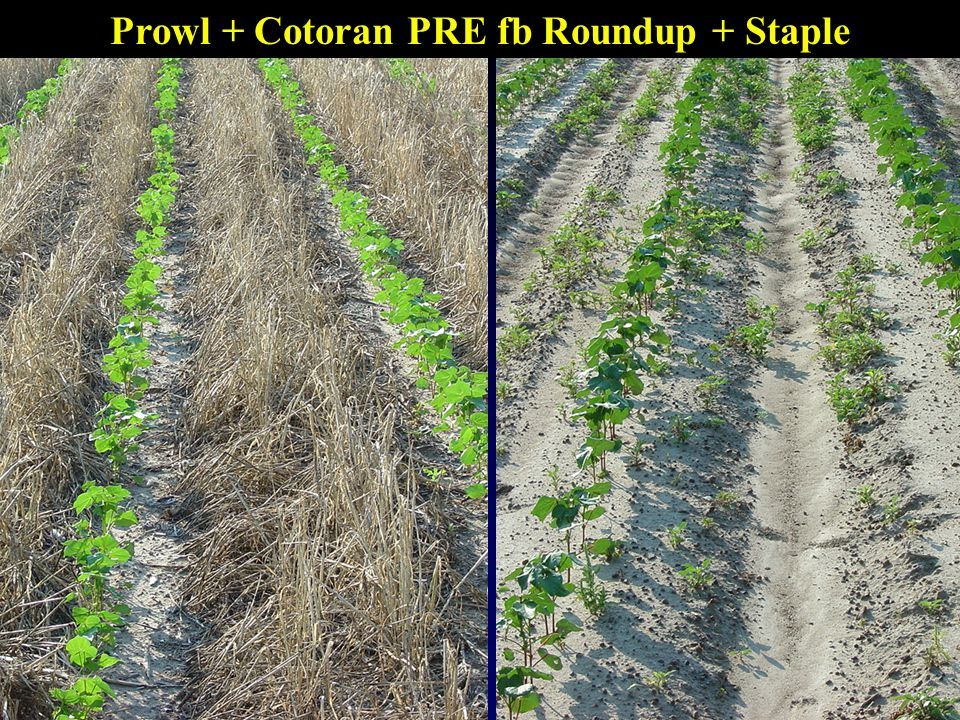 Prowl + Cotoran PRE fb Roundup + Staple