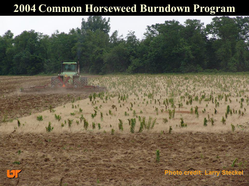 2004 Common Horseweed Burndown Program Photo credit: Larry Steckel