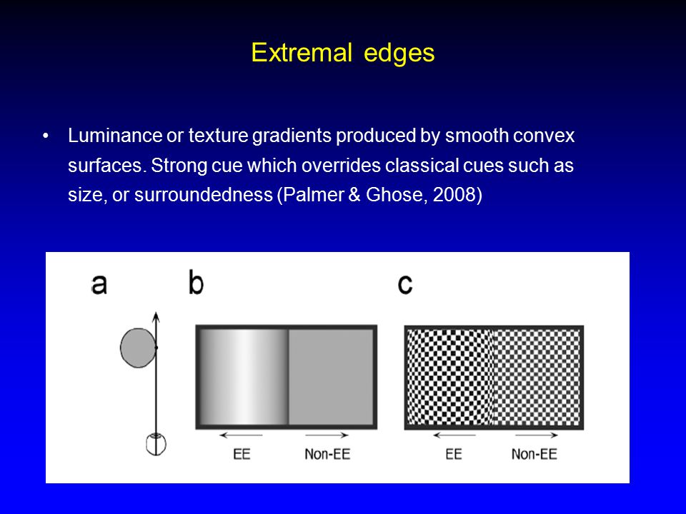 Extremal edges Luminance or texture gradients produced by smooth convex surfaces.