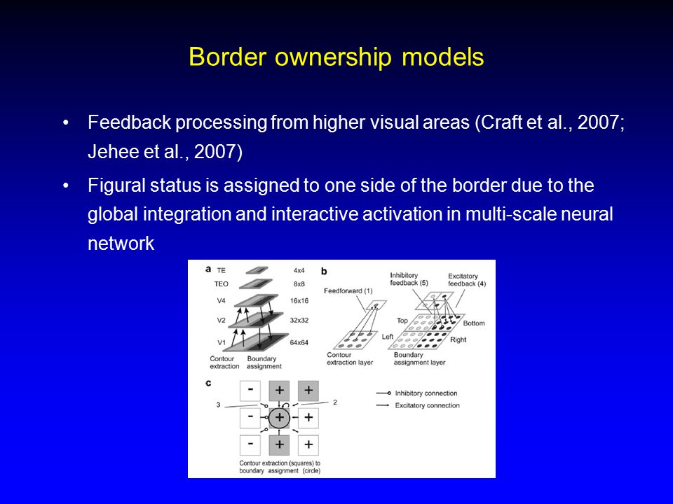 Border ownership models Feedback processing from higher visual areas (Craft et al., 2007; Jehee et al., 2007) Figural status is assigned to one side o
