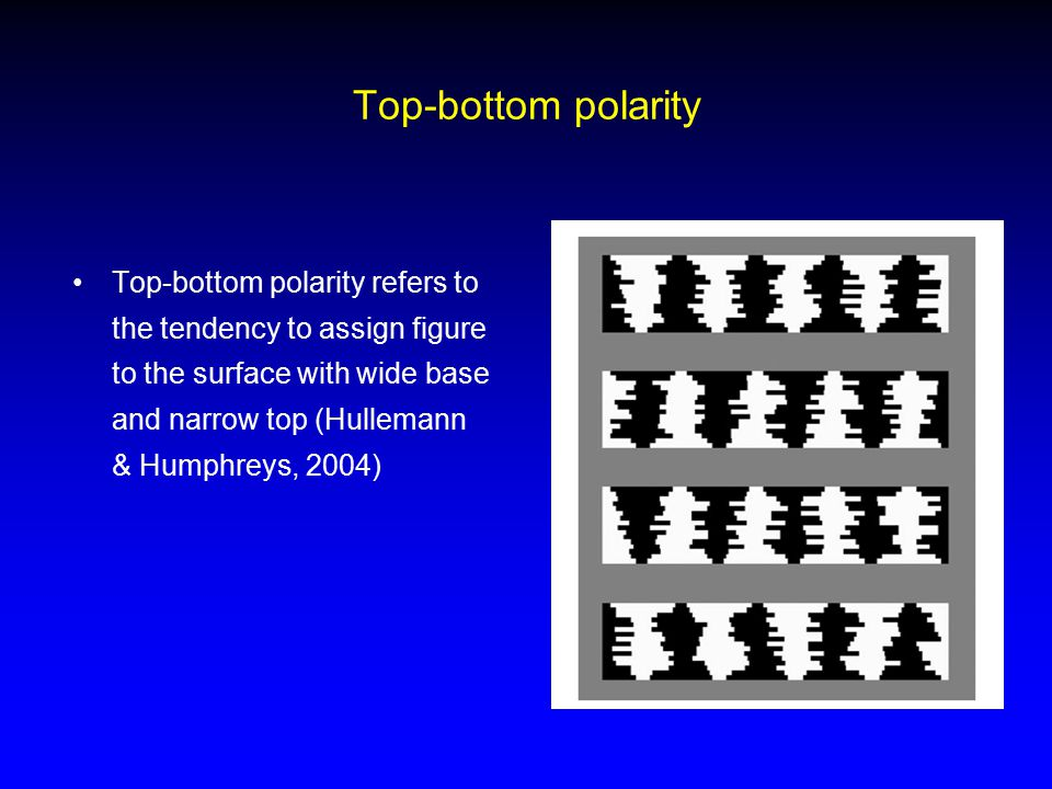 Top-bottom polarity Top-bottom polarity refers to the tendency to assign figure to the surface with wide base and narrow top (Hullemann & Humphreys, 2
