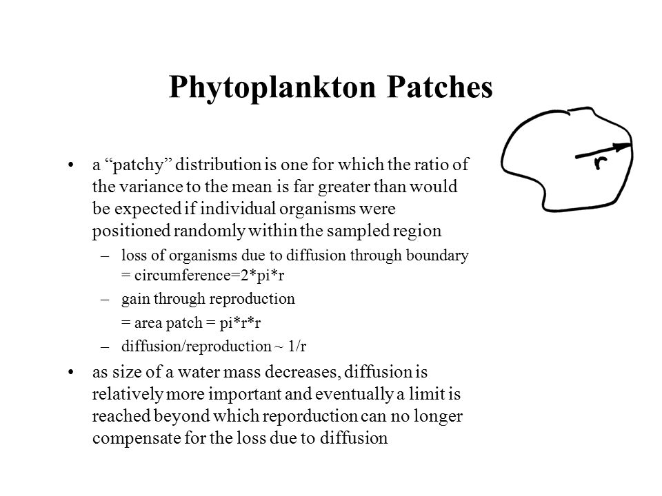 Phytoplankton Patches a patchy distribution is one for which the ratio of the variance to the mean is far greater than would be expected if individual organisms were positioned randomly within the sampled region –loss of organisms due to diffusion through boundary = circumference=2*pi*r –gain through reproduction = area patch = pi*r*r –diffusion/reproduction ~ 1/r as size of a water mass decreases, diffusion is relatively more important and eventually a limit is reached beyond which reporduction can no longer compensate for the loss due to diffusion