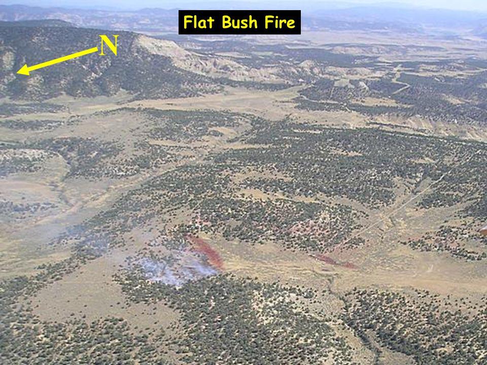 Flat Bush Fire N
