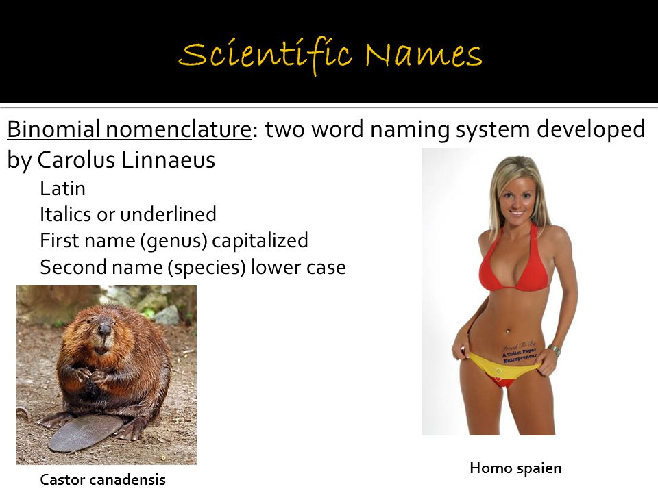Systematics: science of naming and grouping organisms Goal – organize living things into groups that have biological meaning Groups are called taxa