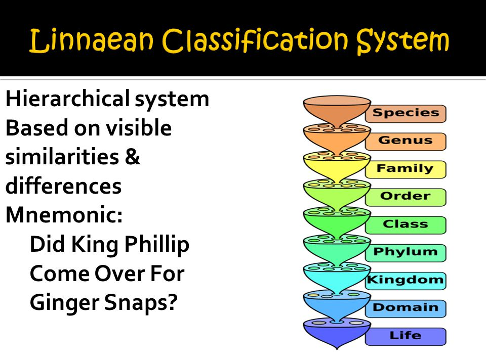 Hierarchical system Based on visible similarities & differences Mnemonic: Did King Phillip Come Over For Ginger Snaps
