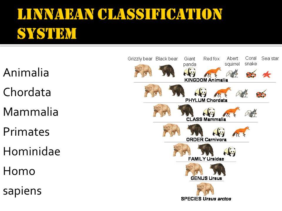 Animalia Chordata Mammalia Primates Hominidae Homo sapiens