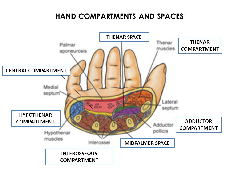 HAND COMPARTMENTS AND SPACES CENTRAL COMPARTMENT THENAR SPACE MIDPALMER SPACE ADDUCTOR COMPARTMENT THENAR COMPARTMENT HYPOTHENAR COMPARTMENT INTEROSSE
