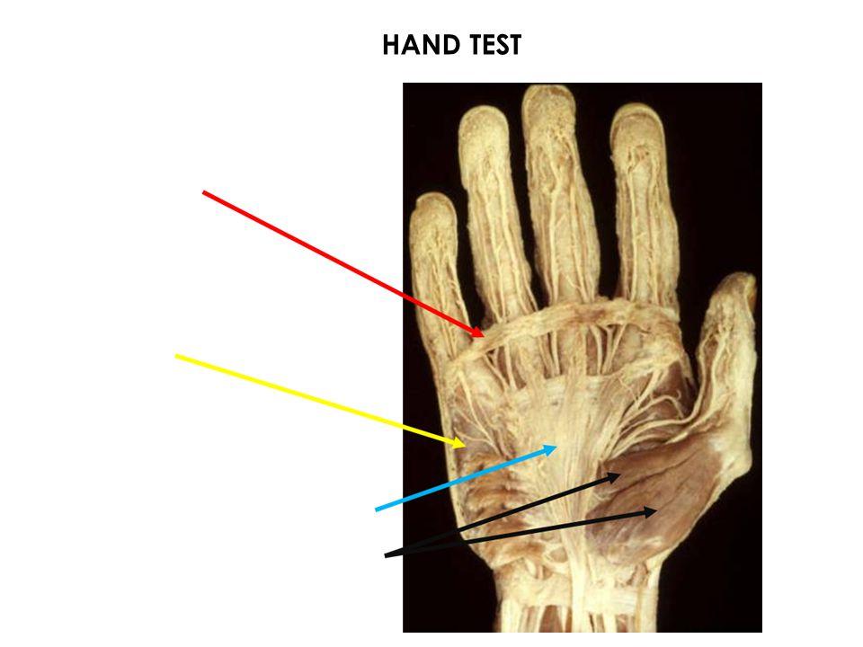 HAND TEST