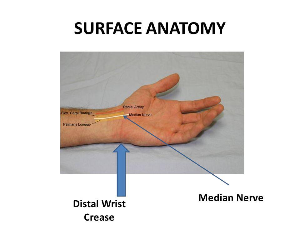 SURFACE ANATOMY Distal Wrist Crease Median Nerve