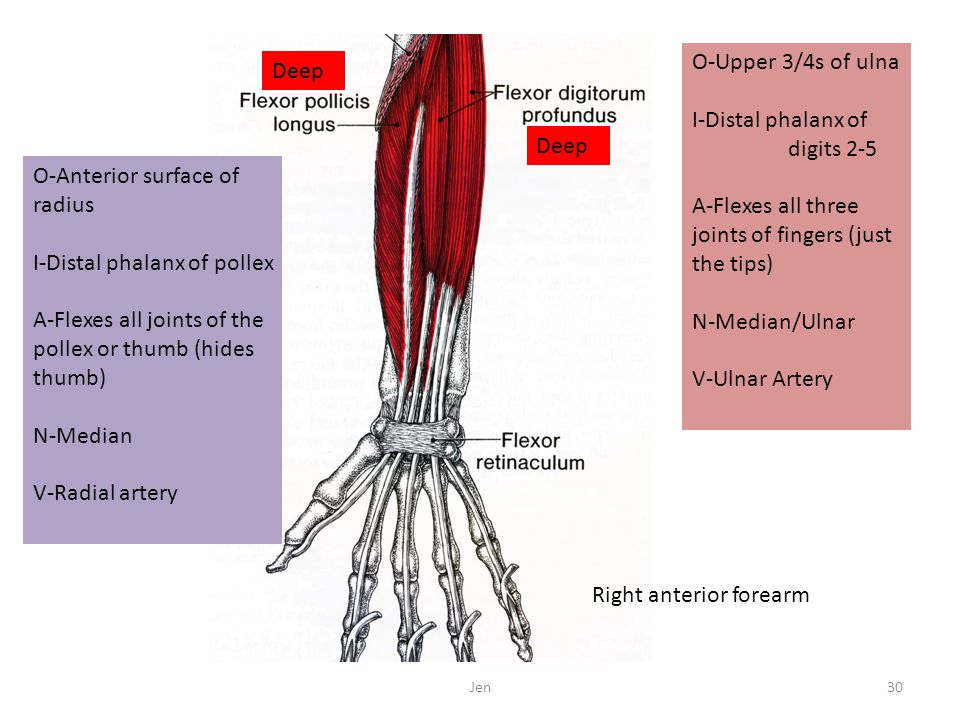 O-Upper 3/4s of ulna I-Distal phalanx of digits 2-5 A-Flexes all three joints of fingers (just the tips) N-Median/Ulnar V-Ulnar Artery O-Anterior surf