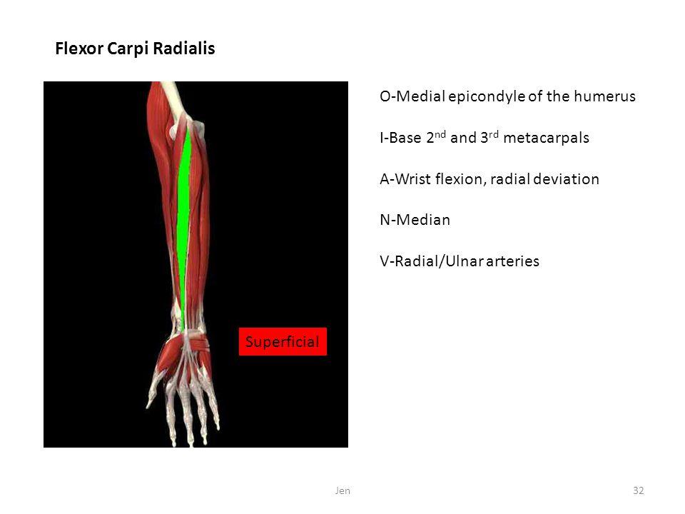 Flexor Carpi Radialis O-Medial epicondyle of the humerus I-Base 2 nd and 3 rd metacarpals A-Wrist flexion, radial deviation N-Median V-Radial/Ulnar ar