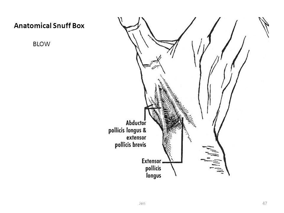 Anatomical Snuff Box Jen47 BLOW