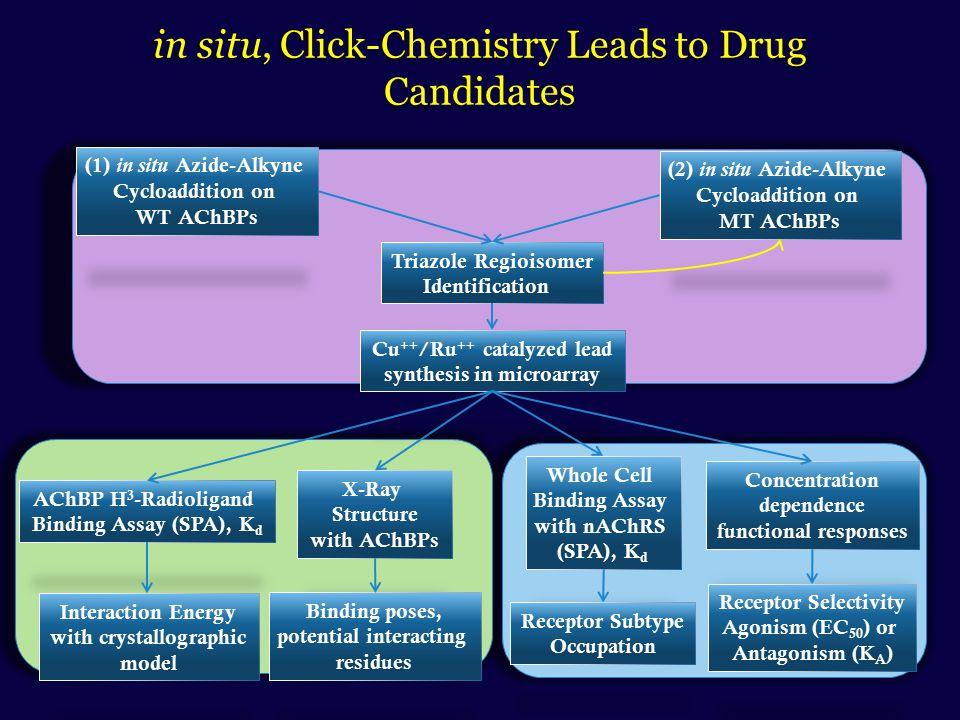 Nicotine Anabaseine Epibatidine Cytisine Anatoxin-a d-Tubocurarine MLA SPX GYM DMXBATropisetronGranisetron Lobeline Sazetidine A  Conotoxin Waglerin  cobratoxin
