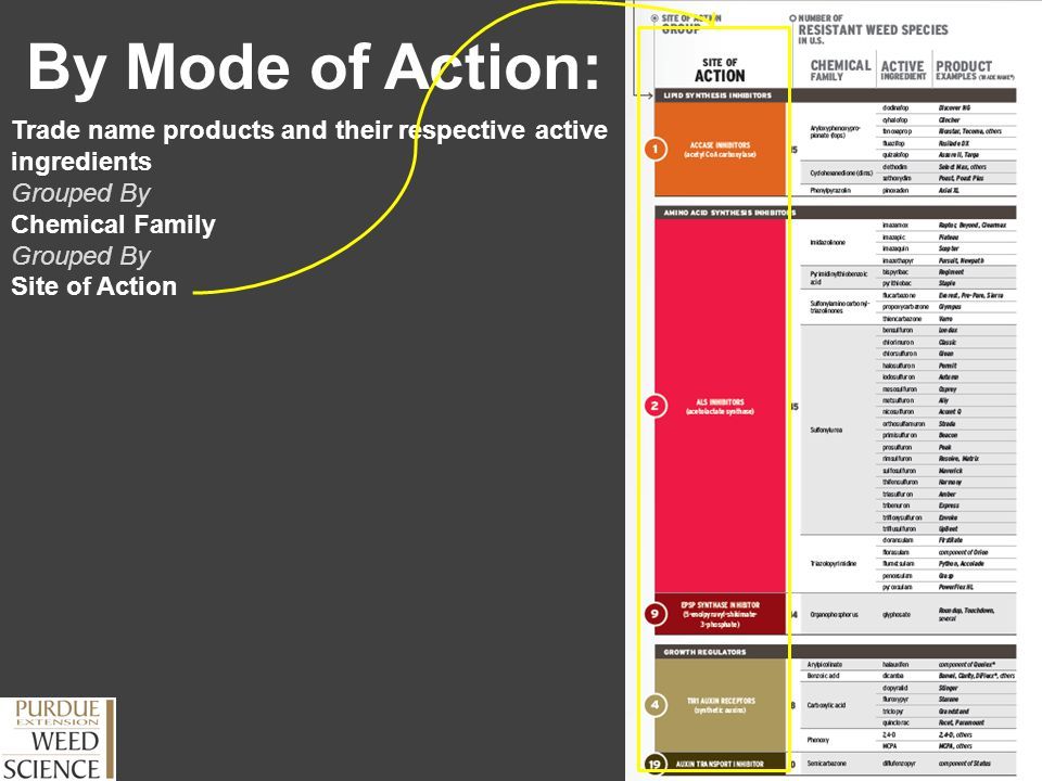 By Mode of Action: Trade name products and their respective active ingredients Grouped By Chemical Family Grouped By Site of Action