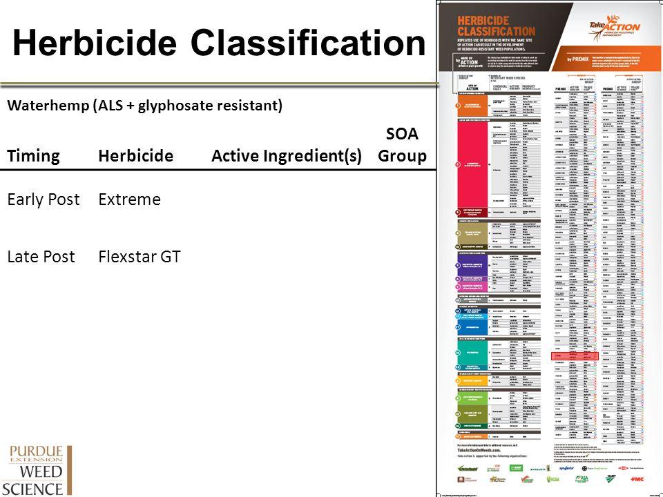 Herbicide Classification Waterhemp (ALS + glyphosate resistant) TimingHerbicideActive Ingredient(s) SOA Group Early PostExtreme Late PostFlexstar GT