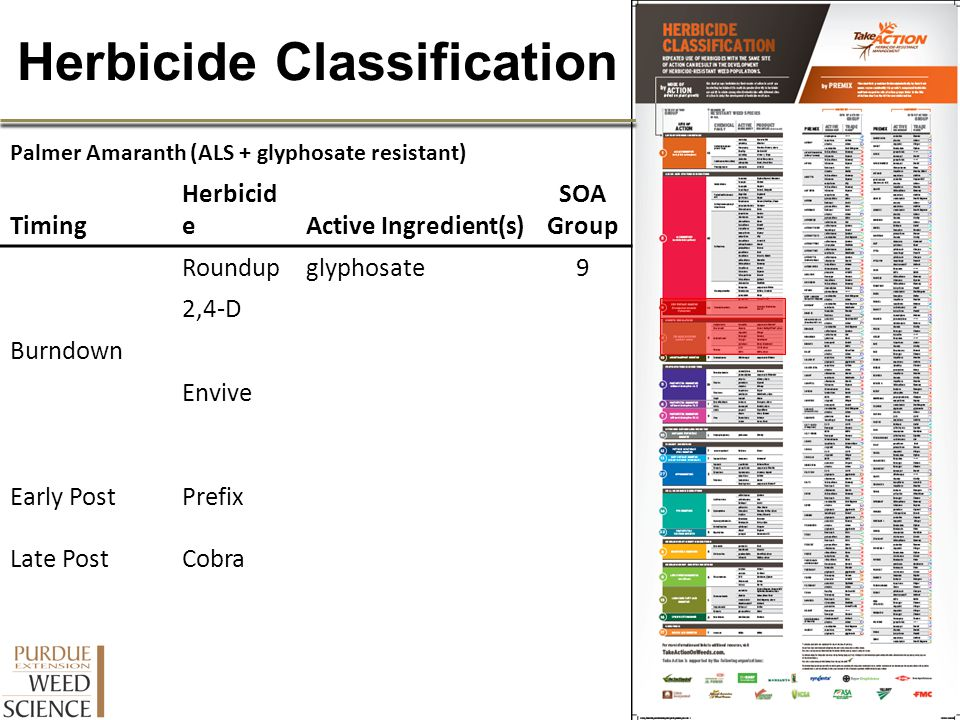 Herbicide Classification Palmer Amaranth (ALS + glyphosate resistant) Timing Herbicid eActive Ingredient(s) SOA Group Burndown Roundupglyphosate9 2,4-
