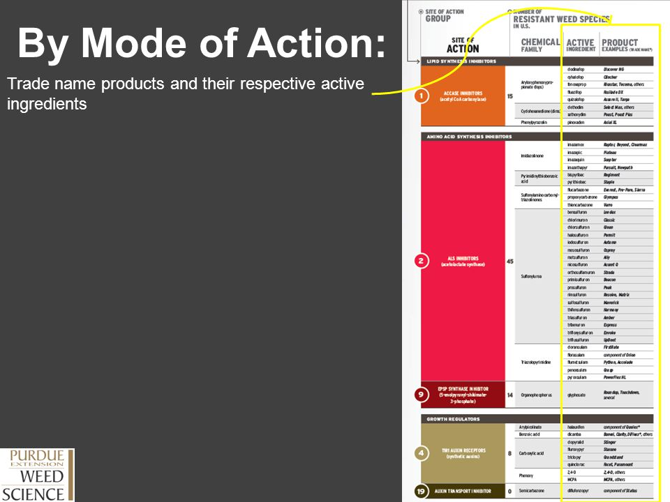 Outline Herbicide Programs Use chart to outline site of action rotation Find products on chart and write down site of action group # What to look for: -# of site of action used -# of effective sites of action used -Selection pressure placed on a site of action (used more than 2x)
