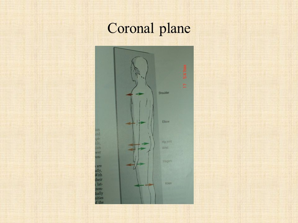 Coronal plane