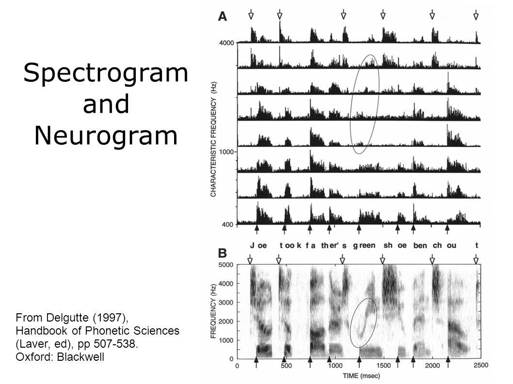 Spectrogram and Neurogram From Delgutte (1997), Handbook of Phonetic Sciences (Laver, ed), pp 507-538.