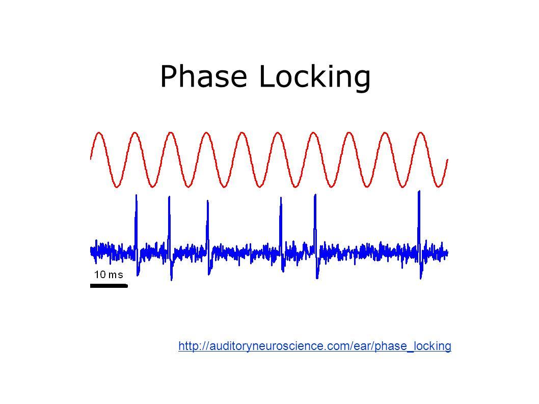 Phase Locking http://auditoryneuroscience.com/ear/phase_locking