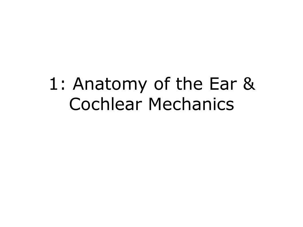 1: Anatomy of the Ear & Cochlear Mechanics