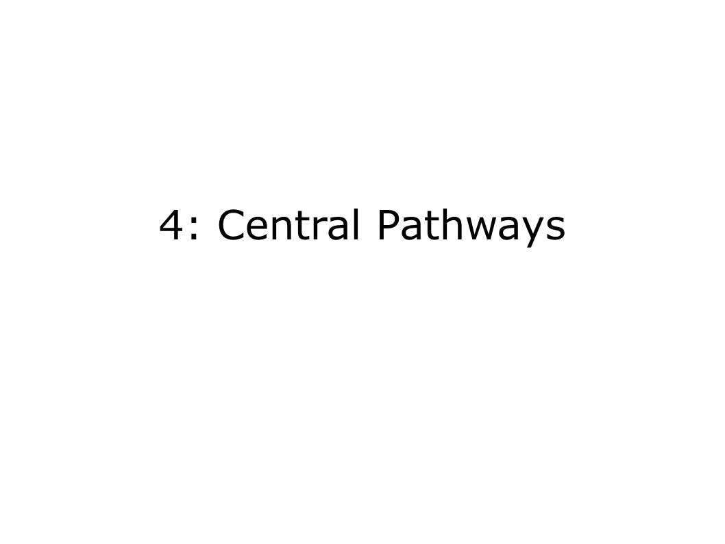 4: Central Pathways