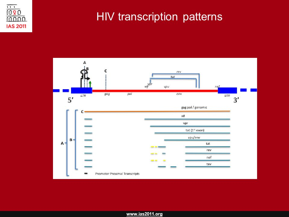 www.ias2011.org HIV transcription patterns