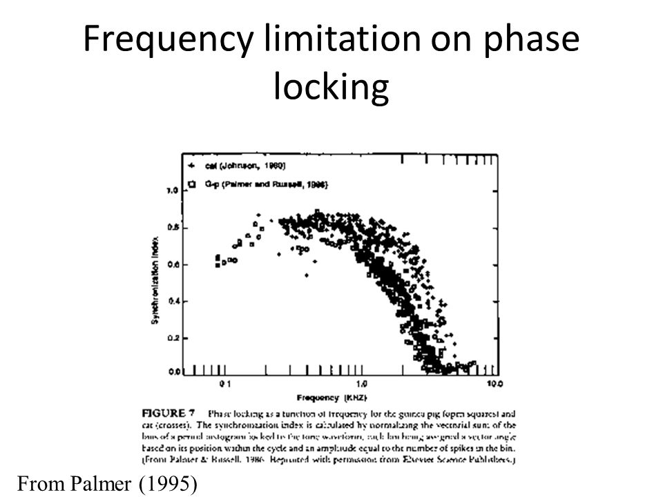 Frequency limitation on phase locking From Palmer (1995)
